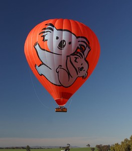 Koala -hot air balloon + NEW Koala balloon